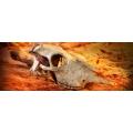 Decoracão Cranio de Buffalo Exoterra pt 2857