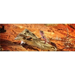 Decoracão Crocodilo Exoterra pt 2856