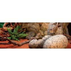 Decoracão Ovos de Dinosauro Exoterra pt 2841